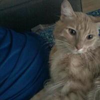 Adopt A Pet :: Coco - Mesa, AZ