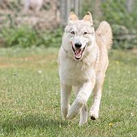 Adopt A Pet :: Danica - 7 months - Augusta County, VA
