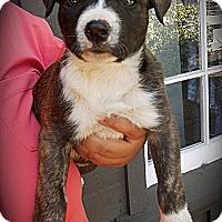 Adopt A Pet :: Princess - Cypress, CA