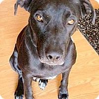 Adopt A Pet :: Jaxson (courtesy post) - Scottsdale, AZ