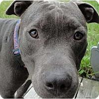 Adopt A Pet :: Tydus - Orlando, FL