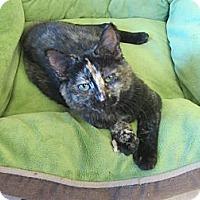 Adopt A Pet :: Madeline - Mobile, AL
