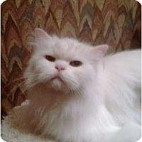 Adopt A Pet :: Snowflake - Greenville, SC
