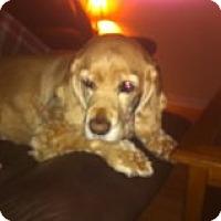 Adopt A Pet :: Ricky - Vaudreuil-Dorion, QC