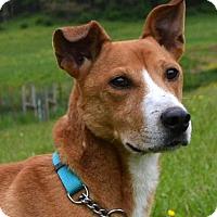 Adopt A Pet :: Mitch - Bakersville, NC