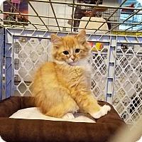 Adopt A Pet :: Weller - Geneseo, IL