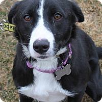 Adopt A Pet :: Destiny - Lebanon, CT