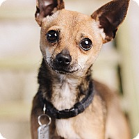 Adopt A Pet :: Pappy - Portland, OR