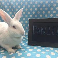 Adopt A Pet :: Daniel - Columbus, OH