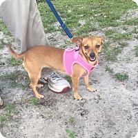 Adopt A Pet :: Anna - Boca Raton, FL