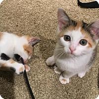 Adopt A Pet :: April - Alexandria, VA