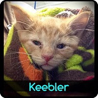 Adopt A Pet :: Keebler - Hartford City, IN