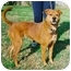 Photo 2 - Chow Chow Mix Dog for adoption in Kingwood, Texas - Autumn