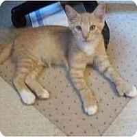Adopt A Pet :: Dreamer - Jenkintown, PA