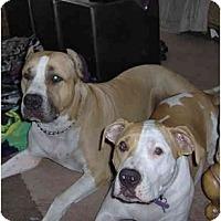 Adopt A Pet :: Roxy - Fowler, CA