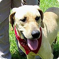 Adopt A Pet :: DELTA - Glastonbury, CT