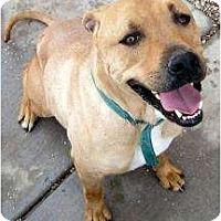 Adopt A Pet :: Ranger - Cedar City, UT