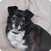 Adopt A Pet :: Martha - Morganville, NJ