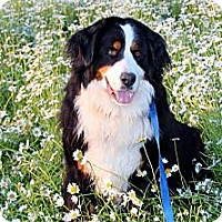 Adopt A Pet :: Lea - Westtown, PA
