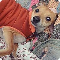 Adopt A Pet :: Artemis - Decatur, GA