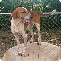 Adopt A Pet :: Cary - Moulton, AL