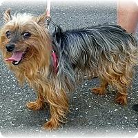 Adopt A Pet :: Diamond - Mississauga, ON