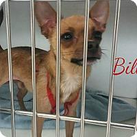 Adopt A Pet :: Bill - House Springs, MO