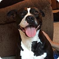 Adopt A Pet :: Inova - Fredericksburg, VA
