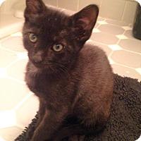 Adopt A Pet :: Mystic - River Edge, NJ
