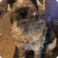 Adopt A Pet :: Cheryl - Tucson, AZ