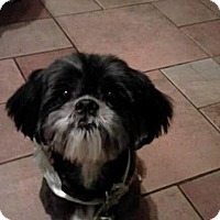 Adopt A Pet :: Willie - Turlock, CA