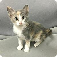 Adopt A Pet :: Janet - Livingston, TX