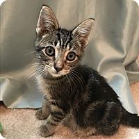 Adopt A Pet :: Jett - Apex, NC