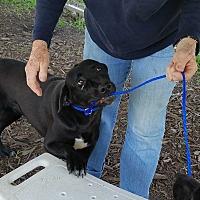 Adopt A Pet :: Chili - Newberry, SC