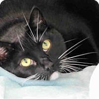 Adopt A Pet :: A1793841 - Bonita, CA