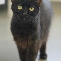 Adopt A Pet :: Cresent - Rocky Mount, VA