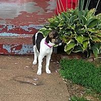 Adopt A Pet :: Alexa - Walthill, NE
