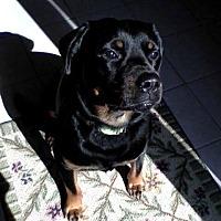 Adopt A Pet :: Brawny - Newaygo, MI