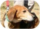 Hound (Unknown Type) Mix Dog for adoption in Palmyra, Virginia - Tango