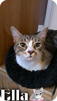 Domestic Shorthair Kitten for adoption in River Edge, New Jersey - Ella