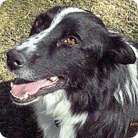 Adopt A Pet :: Niels - Salt Lake City, UT