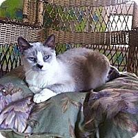 Adopt A Pet :: Quintessa - Tarboro, NC