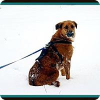 Adopt A Pet :: Tuffy - McKinney, TX