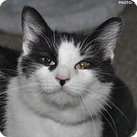 Adopt A Pet :: Pam - Medina, OH