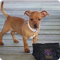 Adopt A Pet :: Lucy - Pinehurst, NC