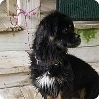 Adopt A Pet :: A - MAXX - Burlington, VT