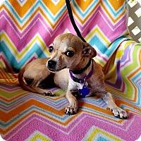 Adopt A Pet :: Nena - Hamilton, ON