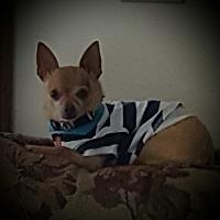 Adopt A Pet :: Winnie - St. john, IN