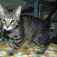 Adopt A Pet :: Otis - Meadow Lake, SK