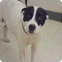 Adopt A Pet :: Lily - Gulfport, MS